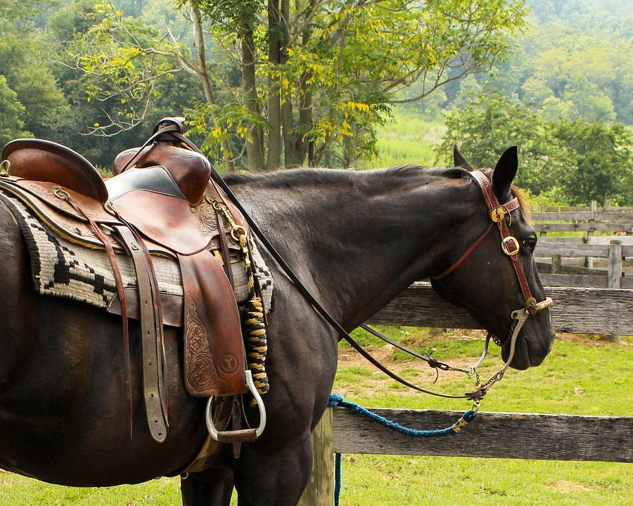Saddle Cleaning